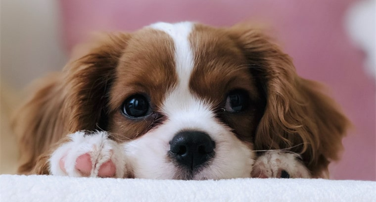 5 Amazing Facts About Dogs