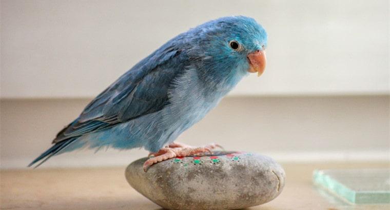 Cute Parrot Names