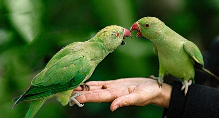 Famous Parrot Names