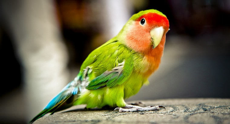 Funny Parrot Names