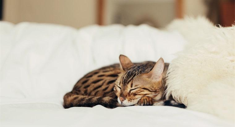 How Does Cat Sleep Differ from Human Sleep