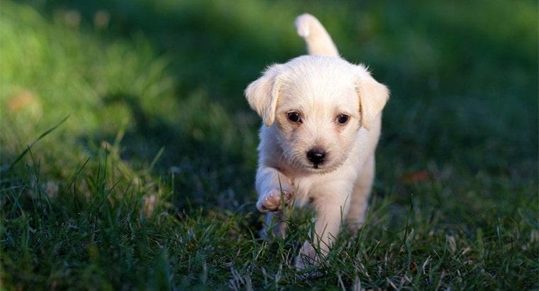 Playful Pun Dog Names