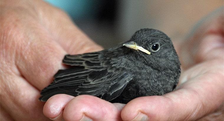 Should I Feed Baby Birds