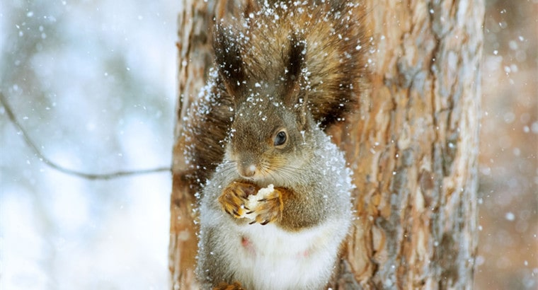 Should I Feed Squirrels in Winter