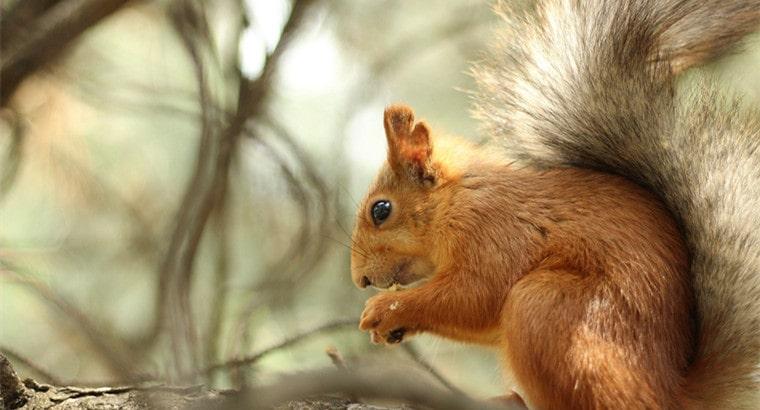Squirrel's Diet