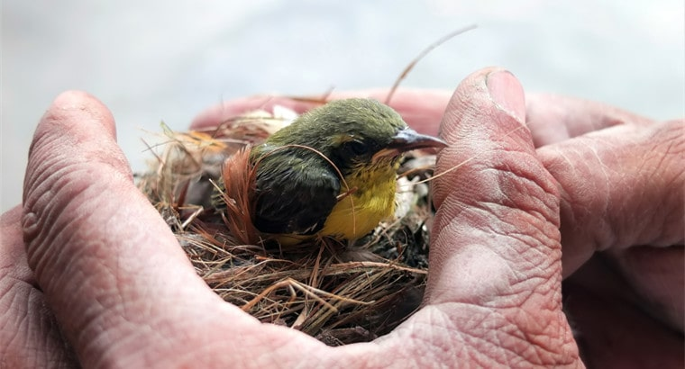 What Baby Birds Should Not Eat