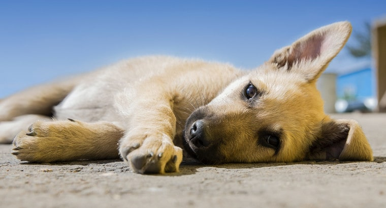 What Diseases Can Dogs Get from Eating Poop