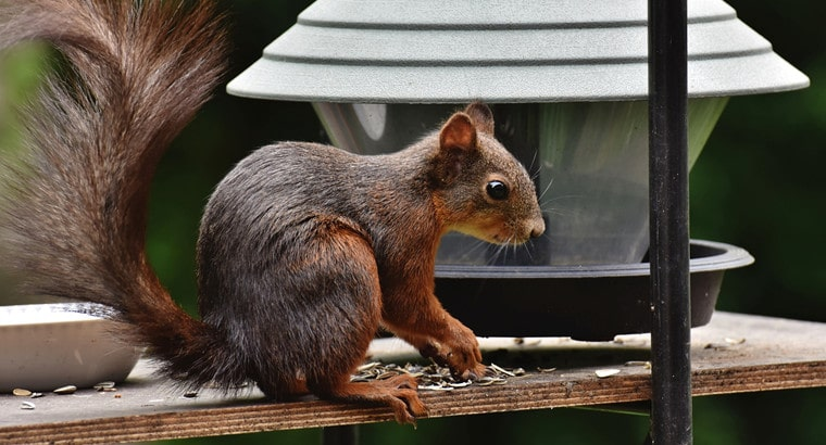 What Foods Are Bad for Squirrels