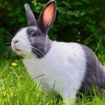 are rabbits good pets