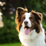 unique female dog names and meanings