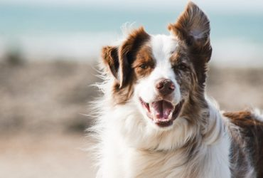 unique male dog names
